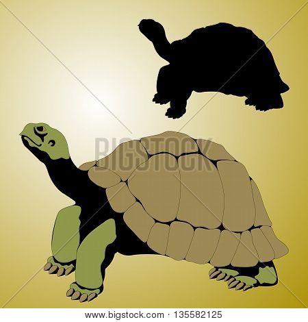 old tortoise realistic vector illustration black silhouette set