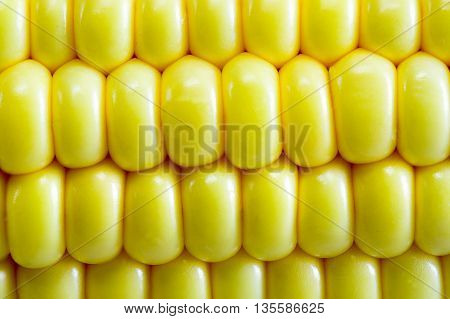 Fresh corn on cobs, closeup corn on wooden table.