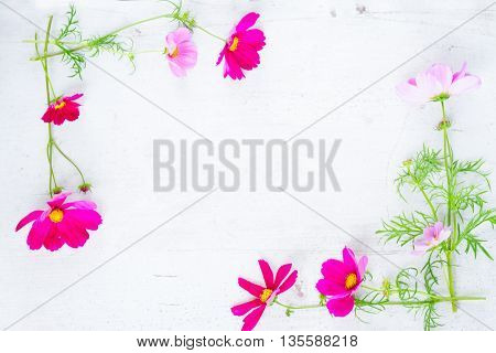 Cosmos fresh flowers frame on white wooden table with copy space