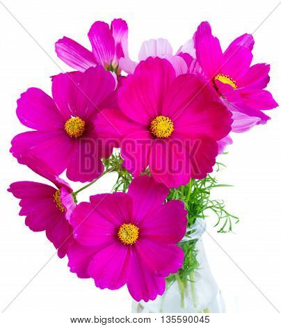 Cosmos pink flowers in vase close up isolated on white background