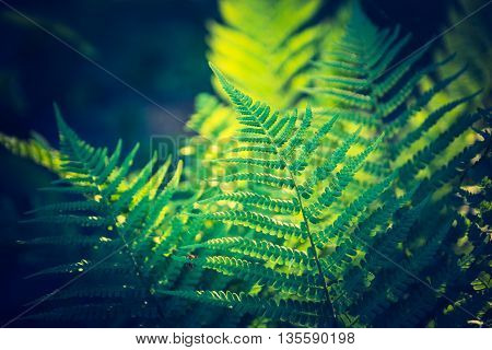 Vintage Photo Of Beautiful Fern Leaves