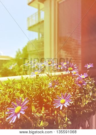 Balcony with blooming daisies. Retro style photo with light leaks.