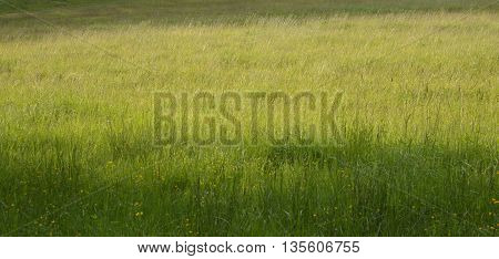 A meadow or field with mostly grass.