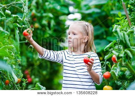 Cute little girl collects crop tomatos in the greenhouse