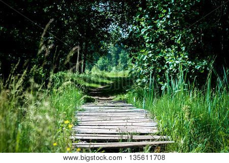 Green Meadow Frame