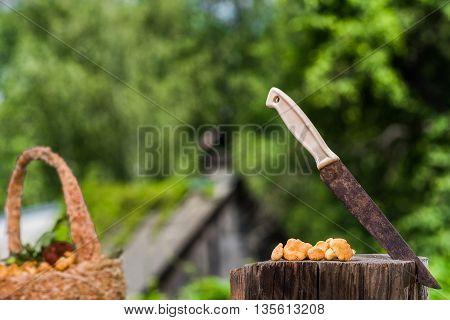 Fresh Mushrooms Over Green