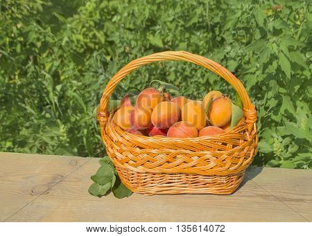 Ripe apricots on green background. Fresh apricots on a wooden table