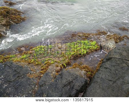 green alga on the stone, reusam island, aceh jaya