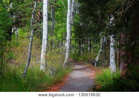 Walking and bike trail in woods