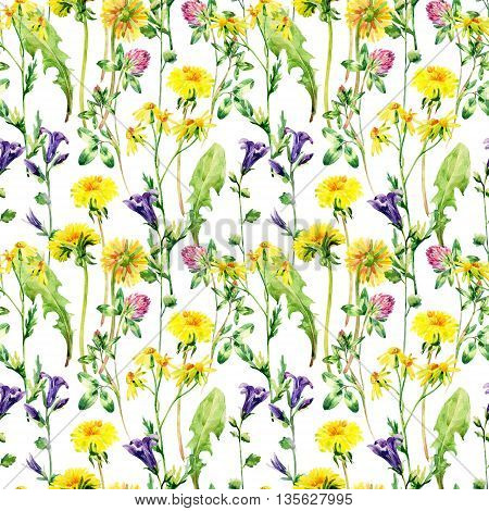 Meadow watercolor flowers seamless pattern. Watercolor wild bellflowers dandelion daisy and herbs background. Hand painted natural illustration