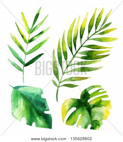 Set of four tropical leaves isolated on white background. Hand drawn leaves illustration in watercolor.