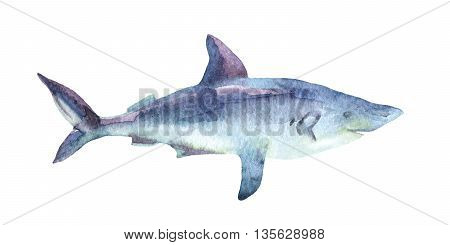 Grey reef Shark isolated on white background. Watercolor illustration