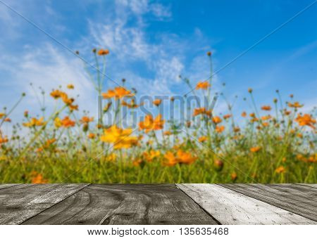 Image Of Orange And Yellow Cosmos Flowers In Garden Field On Day Time For Background.