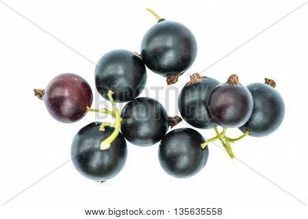 Black currant on a white background.     We see   currant  in a garden near Kiev.