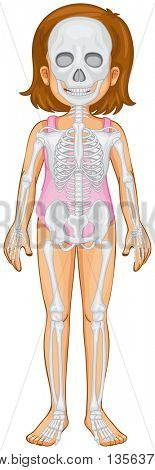 Skeletal system in human girl illustration