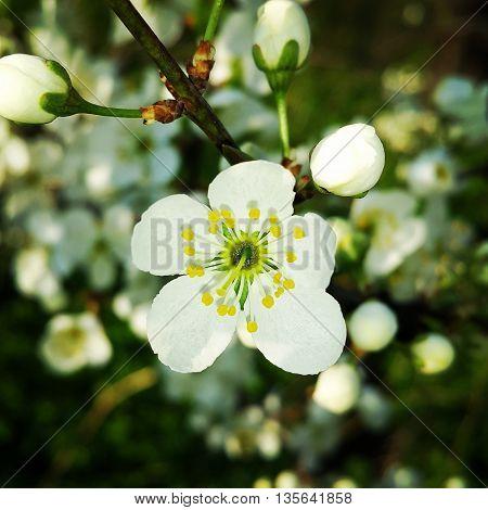 Солнечная весна. Прекрасное цветение.  По весне набу