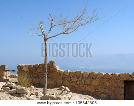 Dead tree at Masada citadel, Masada hill, Israel