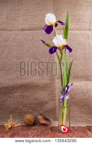 Flowers an iris in a vase on a table