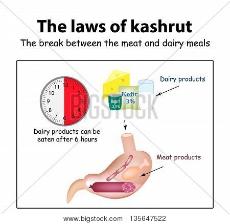 The laws of kosher. The break between the meat and dairy meals. Kosher dairy products in the stomach. Kosher meat products. Vector illustration on isolated background.