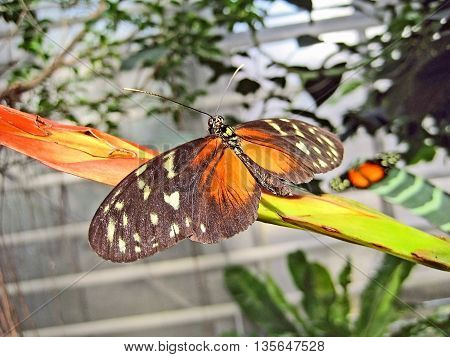Butterfly on twig - animal in nature
