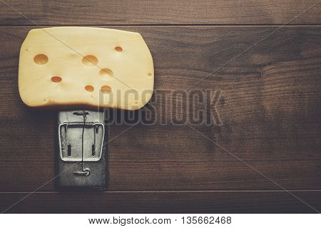 very big piece of cheese in mousetrap concept