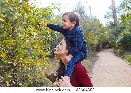 kid boy sitting on mother shoulders picking leaves from a tree in the park