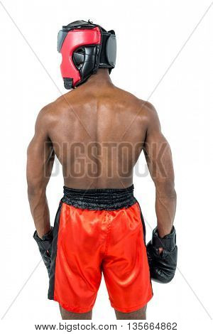 Rear view of boxer standing on white background