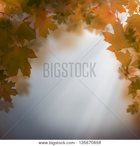 Autumn night background - abstract nature concept with sky and leaves