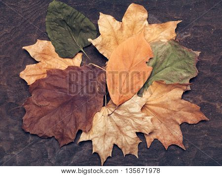 autumn seasonal dried leaves arrangement yellow green and brown color lying on textured background for applique