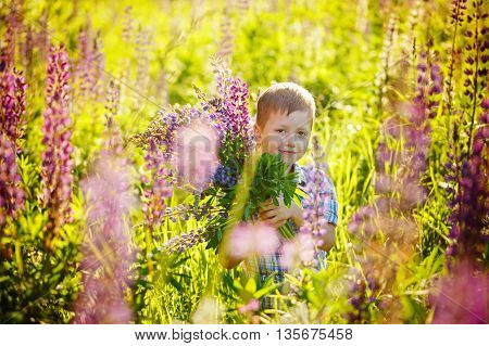 Cute Preschool Child In Violet Lupines Flowers Field, Holding A Bouquet Of Wild Flowers
