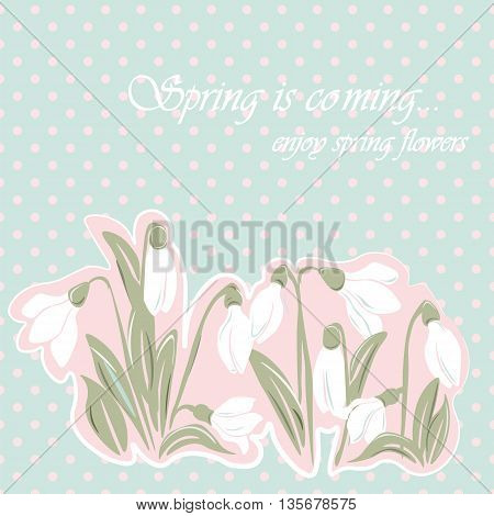 Snowdrop flowers Blossom spring card. Vector spring background.Calligraphic frame. Place for text. Rose quartz color