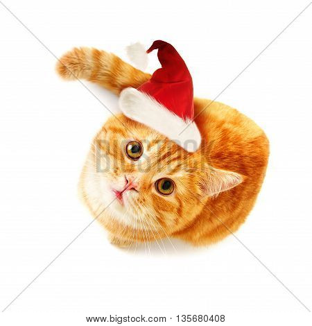 Christmas Cat Looking Up on White Background (top view)