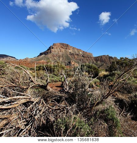 Canary Islands Tenerife landscape of dried tree mountains and sky