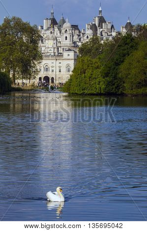 A Swan on the the lake in St. James's Park with the Horse Guards building in London.