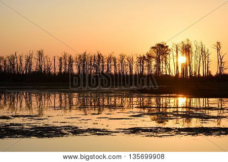 Silhouette of Trees at Sunrise Reflecting in Water