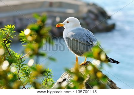 adult seagull sits on the rock with green bushes
