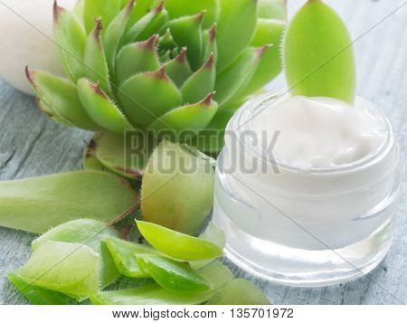 cosmetics with houseleek