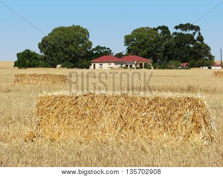 Bails Of Hay After Harvesting Wheat 01