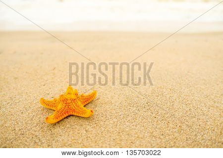 Starfish relax on the white sand at the beautiful beach on sunny day.