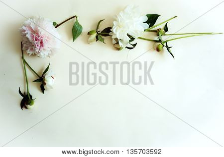 peonies with buds on the table. top view, space for text