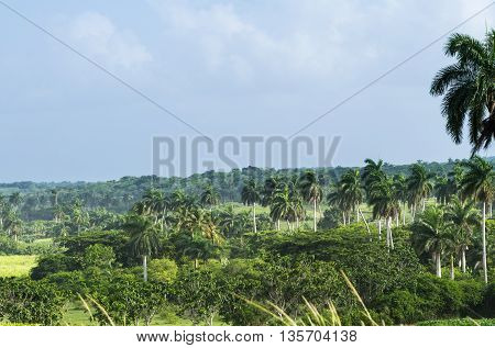 Landscape in the Humboldt national park in Cuba