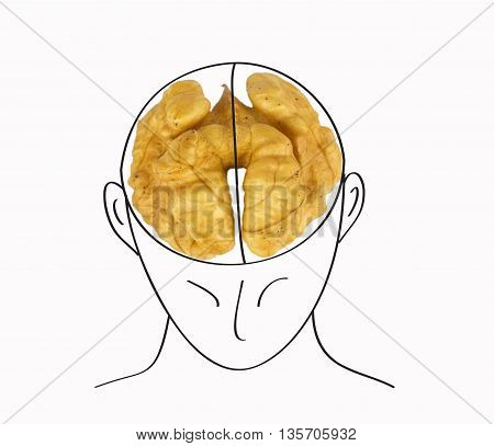 human head with the brain in the form of a walnut on a white background
