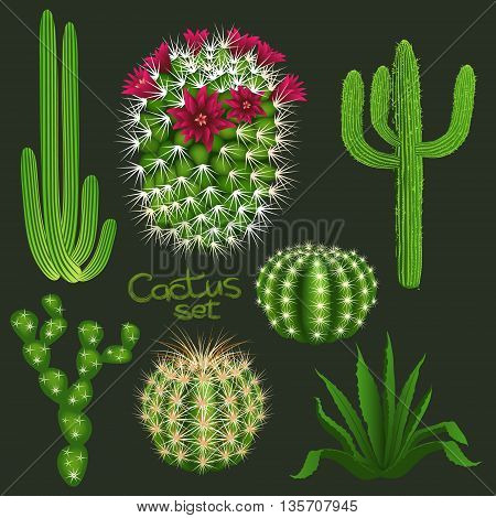 Different cactus types realistic isolated plant icons set. Vector illustration