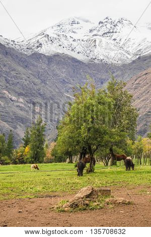 Horses At Farm In San Alfonso Valley, Chile