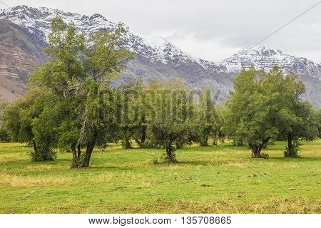 Farm In San Alfonso Valley, Chile