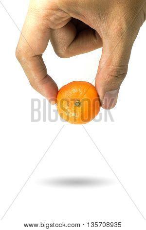 Orange Picking By Hand Isolated On White Background.