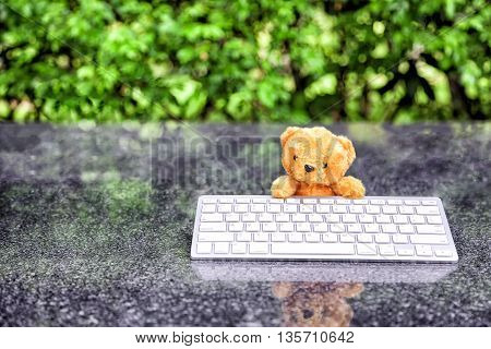 cute teddy bear with a wireless keyboard In the park. internet surfing or computer work concept.