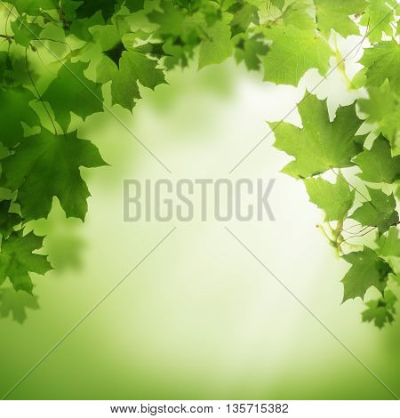 Abstract green nature background with white sunlight