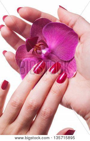 Manicured Nails Caress Dark Pink Flower Pedals