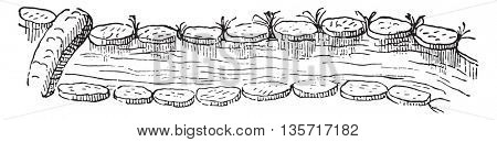 River muscat wine, pies banks, biscuit bridge, vintage engraved illustration. Magasin Pittoresque 1842.